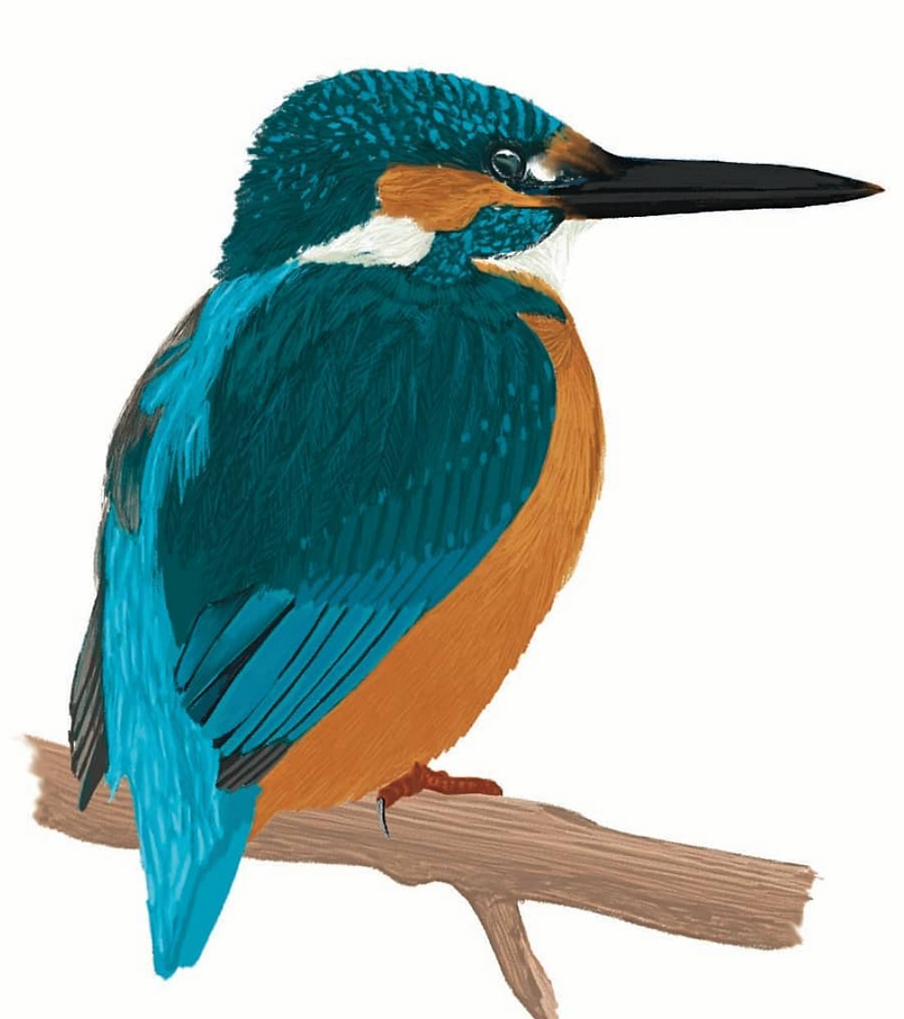 A digital painting from The Bird Book by Nicola Howell Hawley