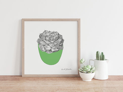 Succulent Wall Art GREEN | From Original Drawing by Howell Illustration