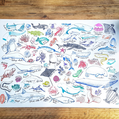 Sea Creatures Print Now Available as Glossy Poster!