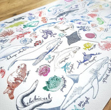 Sea Creatures Drawing by Howell Illustration
