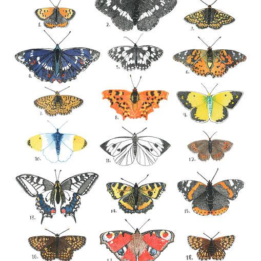 Dotowork Butterflies