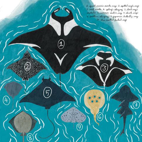 Manta Ray Double Page Spread