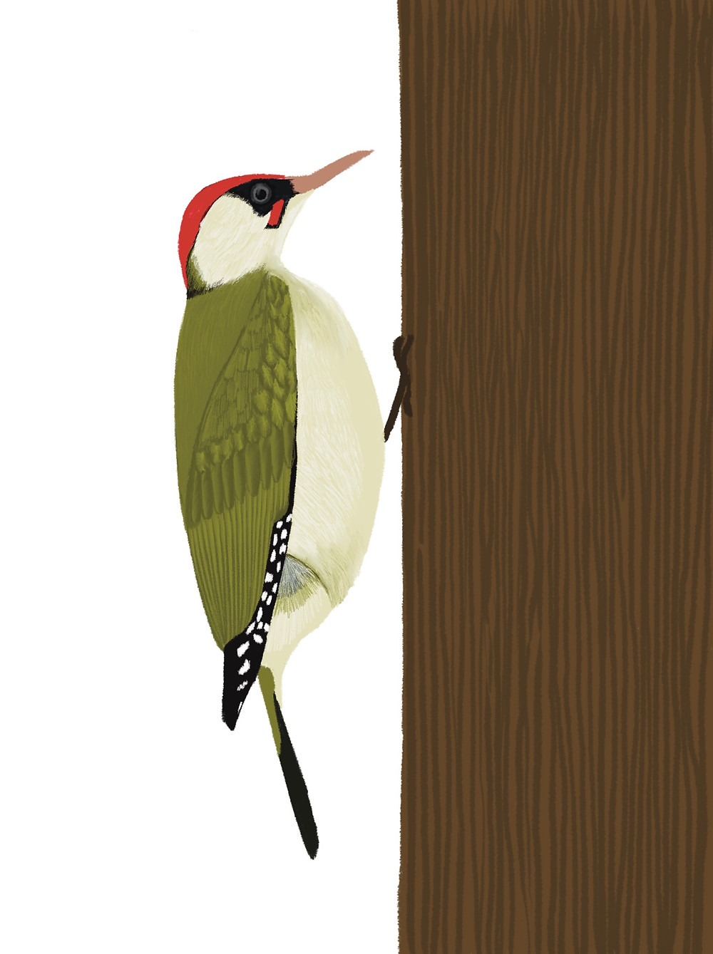 A drawing of a green woodpecker before edits