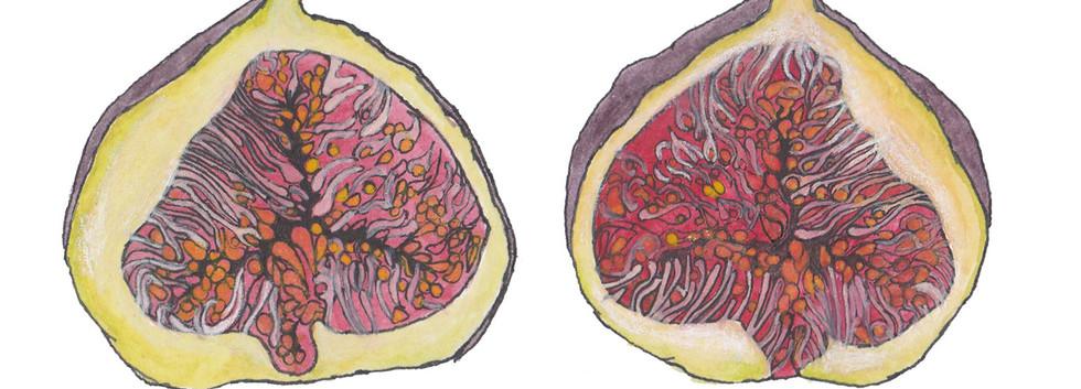 Fig Art