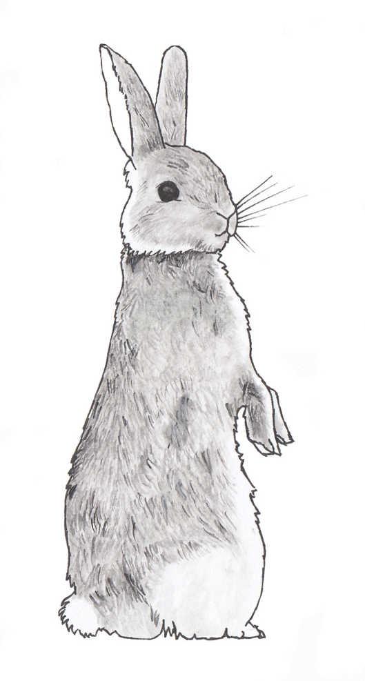 Standing Rabbit Illustration