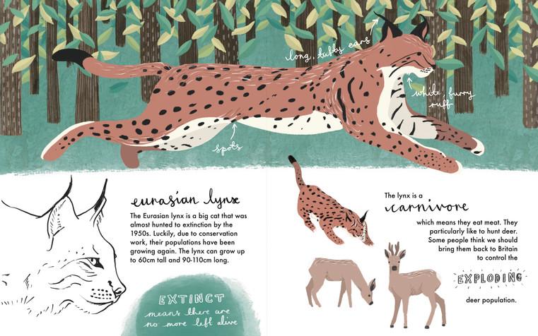 Eurasian Lynx Double Page Illustration
