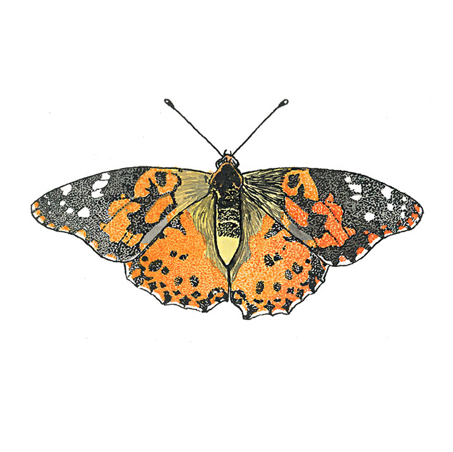 Painted Lady Mini Print.jpg