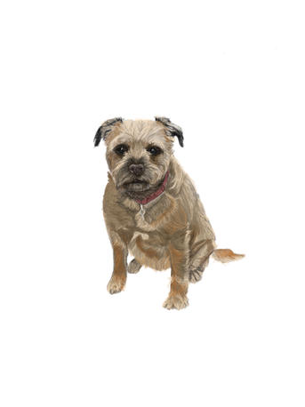 A Digital Painting of Border Terrier Mia