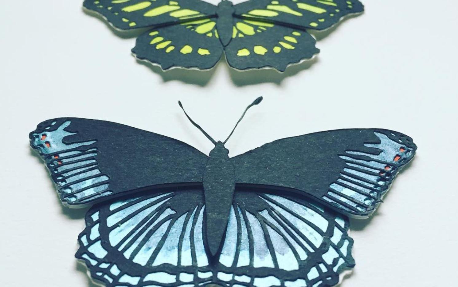 Mum's butterflies.JPG