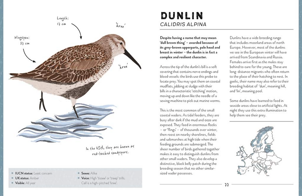 A page from The Bird Book by Dr Meriel Lland and Roxy Furman featuring a dunlin