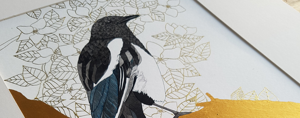 Magpie Drawing by Howell Illustration