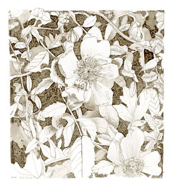 A pen and ink drawing of blossoms on a tree