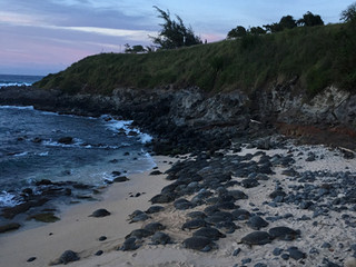 Weekend Adventure -Midwives in Maui