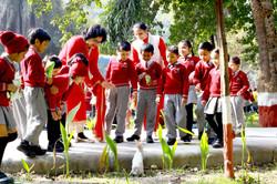 Activities Plantation