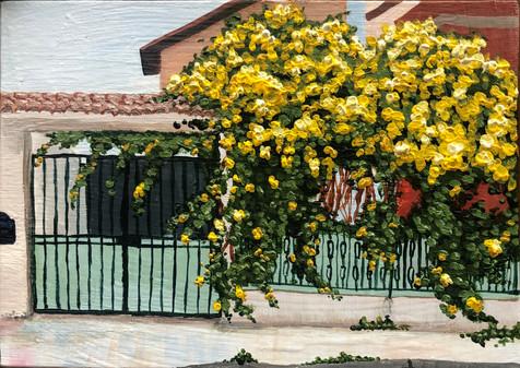Over the Garden Gate