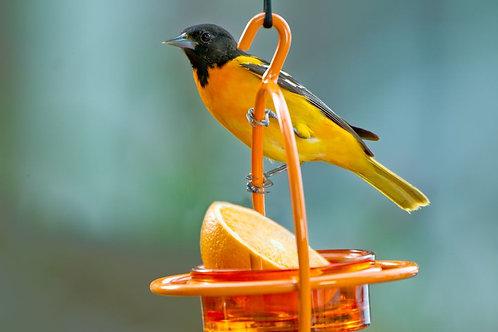Hummble Bold™ Bird Feeder