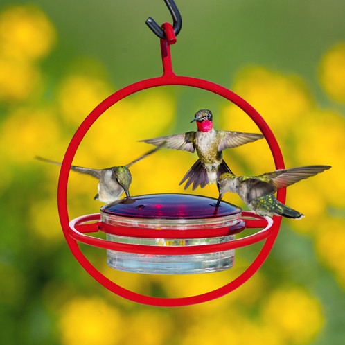 the version they bottles a fairy helped our two are feeders turn hubs hummingbird hanging old coke into on porch me tale of here my front feeder