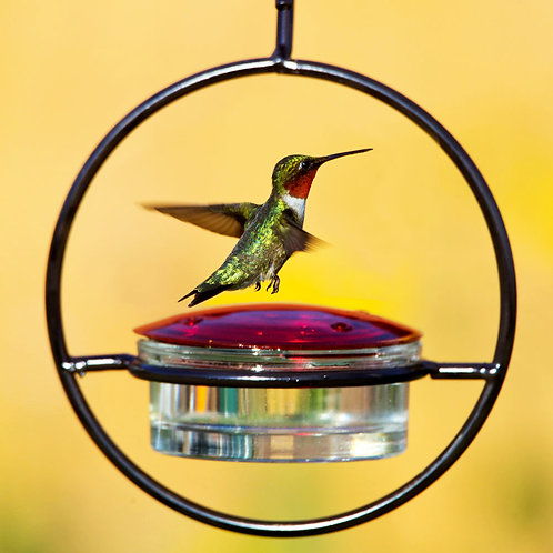 Hummble Slim™ Hummingbird Feeder