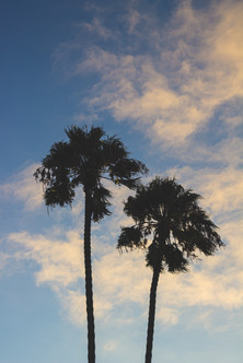 Palm Trees on Cotton Candy