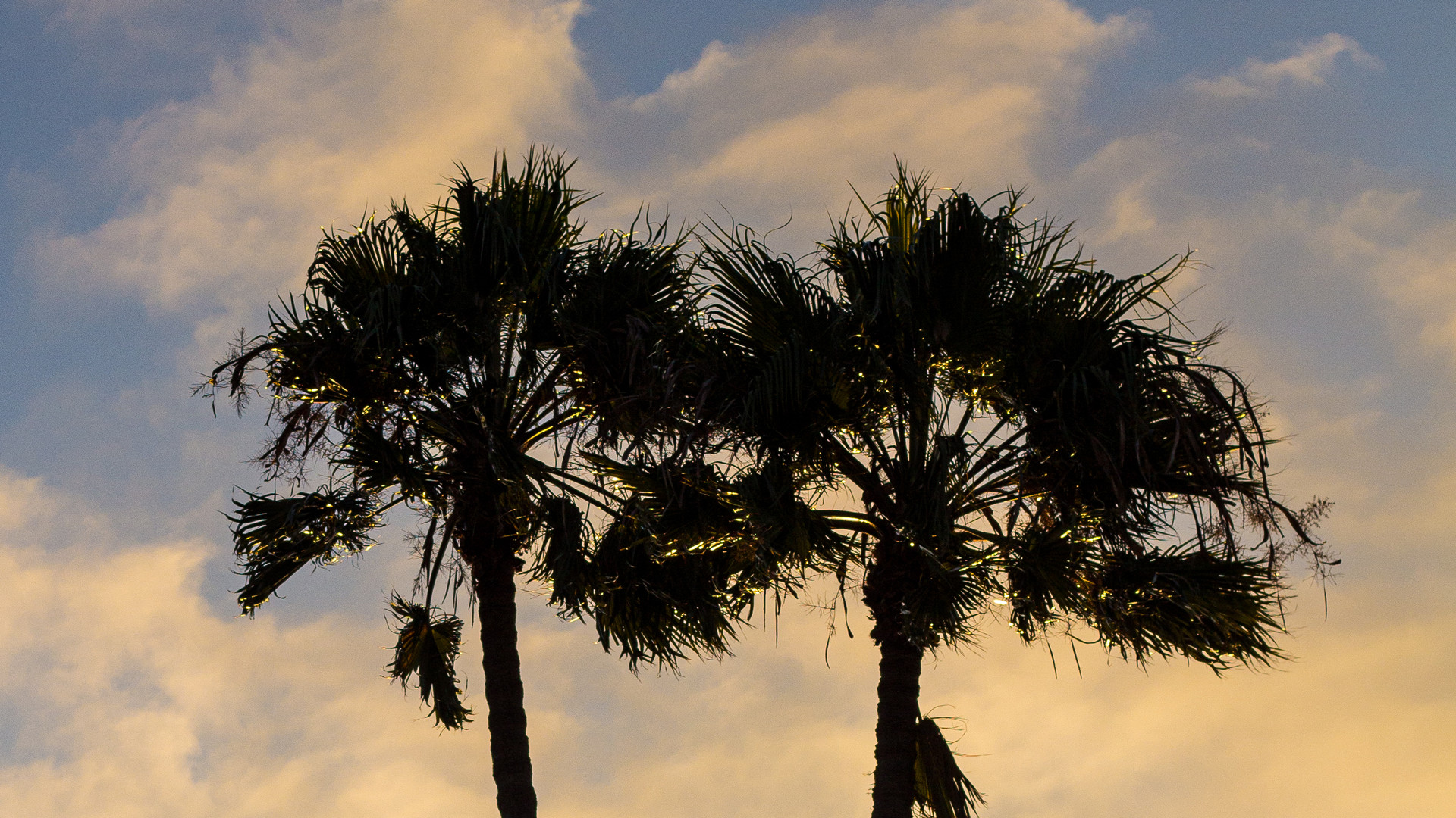 Palm Trees Over Cotton Candy