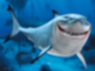 Finding Nemo 000001-002 Cropped.jpg