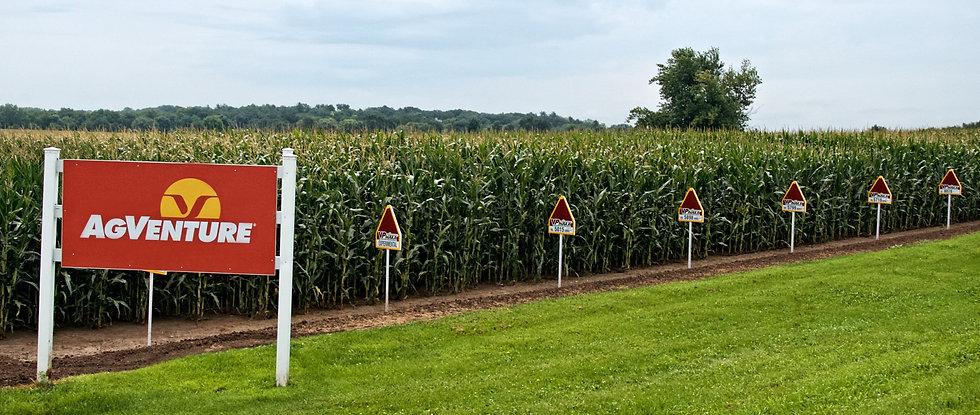 Corn%20Field_edited.jpg