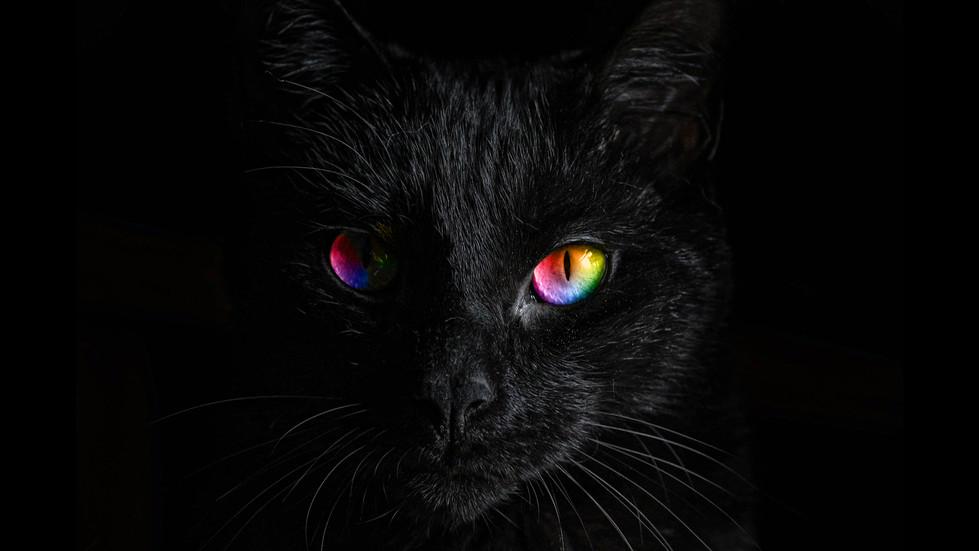 TRS_Free download_Rainbow kitty.jpg