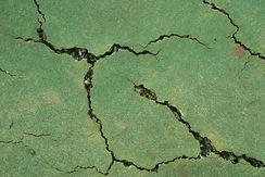 Tennis Court Root Damage