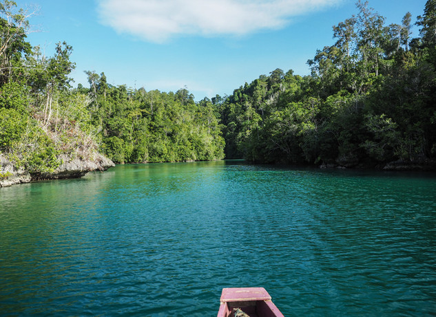Mangrove forest - back of the island