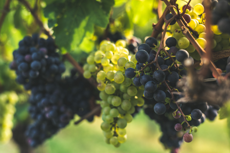 Wein Erlacher