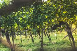 Weingarten Erlacher