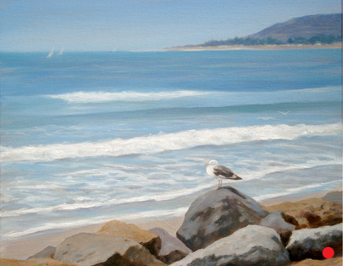 Lone Seagull at Pierpont Beach