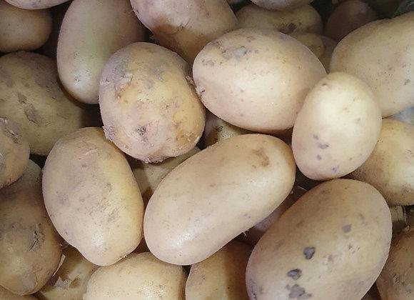 pomme de terre grenaille bio
