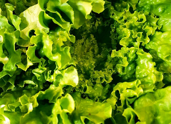 salade bio selon arrivage