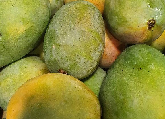 Mangue kent bio