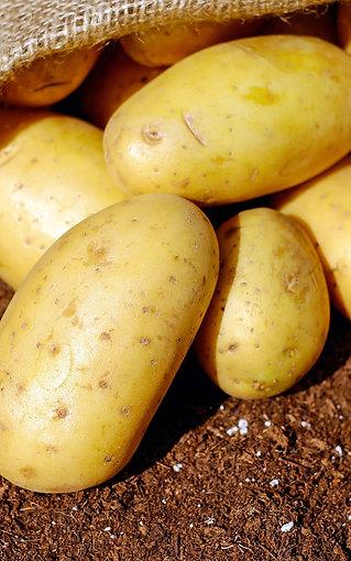 pomme de terre bio chair ferme