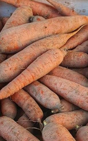 carotte bio