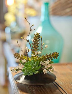 Succulet Vase