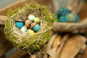 Birds Nest w/ Hand Painted Acorns