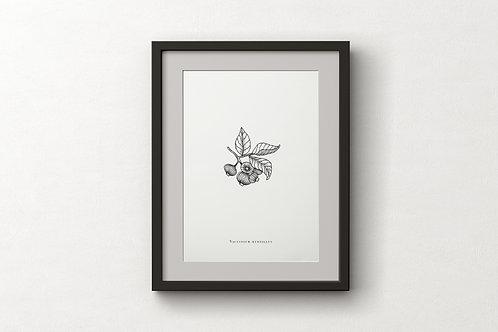 """Poster """"Vaccinium Myrtillus"""""""