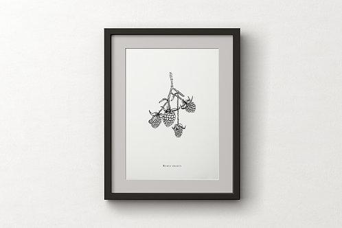 """Poster """"Rubus Idaeus"""""""