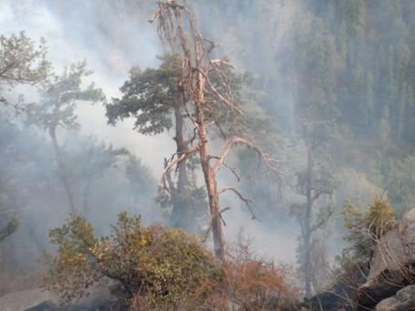 छोगटाली के जंगल में लगी आग, समय रहते आग पर पाया गया काबू