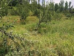 बागवानी मंत्री ने 15 दिनों में मांगी फसलों व फलों को हुए नुकसान की रिपोर्ट