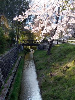 穂高の春 2