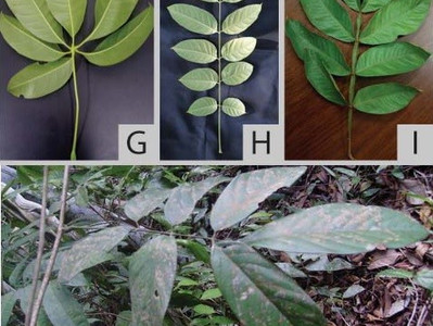 Livro: Noções morfológicas e taxonômicas para identificação botânica