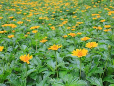 Paisagismo ecológico: plantas nativas e exóticas
