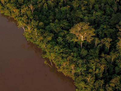 LABVERDE: uma imersão na Floresta Amazônica