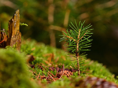 15 de Abril - Dia nacional da conservação do solo