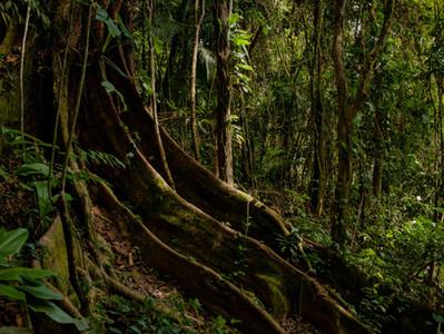 A importância da preservação das florestas