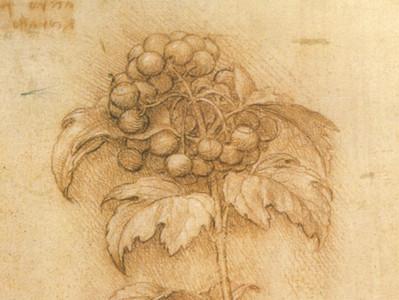 A Botânica de Leonardo da Vinci